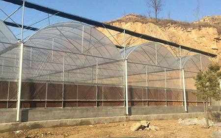 Gutter Connected Greenhouse   Multi-span Greenhouse   Snrcorp